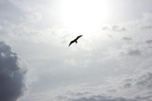 bird-692070_1280