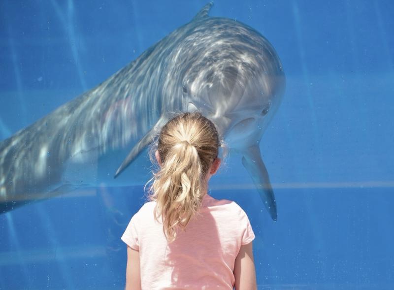 dolphin-1548448_1920_10-36-41_10-38-53